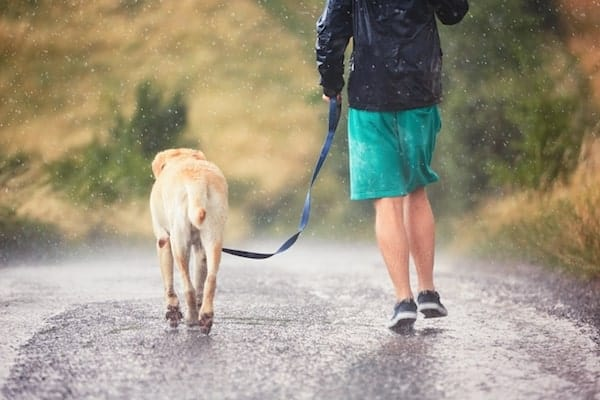 7 Reasons Why You Need A Professional Dog Walker or Pet Sitter