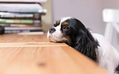 11 Pet Care Myths BUSTED!