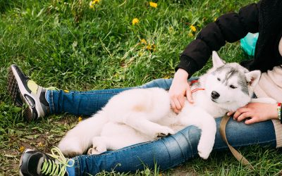What Are The Specific Factors That Make Professional Pet Sitters So Special?