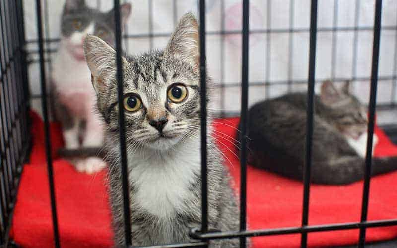 Adopt A Cat Month: An Interview with Edson Animal Rescue